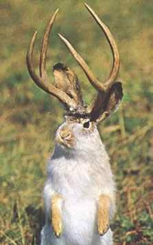 Douglas is the genuine home of the jackalope.