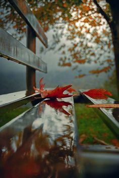 Red Leaves Down.. by Makis Bitos on 500px..... #autumn #leaves #landscape #reflection #nature #light #rain #colors #colours