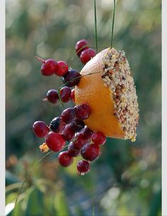 ✨DIY Fresh Fruit Bird Feeder✨