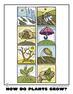 Here's a set of cards for sequencing the life cycle of a plant.