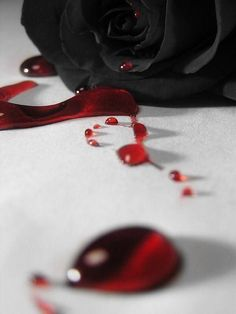 Blood rose