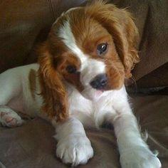 The head tilt gets me! ❤️ #dog #photooftheday #cute #petstagram #supercute #instagood #dogs #cute
