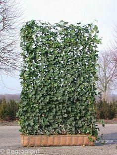 Privacy wire fence with evergreen vines Hot Tub Backyard, Backyard Hammock, Backyard Pool Landscaping, Backyard Privacy, Backyard Fences, Driveway Fence, Vine Fence, Raised Garden Planters, Ivy Wall