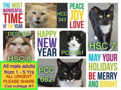 These cats need a rescue or adoption ASAP. If you are a rescue or know a rescue that can help, please contact Hawkesbury Pound, NSW on (02) 4560 4644 or email companionanimal@hawkesbury.nsw.gov.au