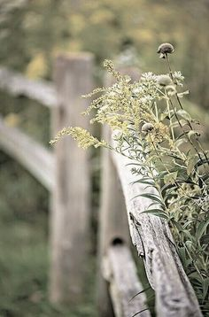 Country LIving ~ fences and wildflowers