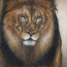 Pat Erickson ~ Figurative / Wildlife painter [Part 1]