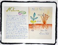 Waldorf ~ 5th grade ~ Botany ~ main lesson book
