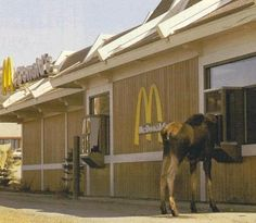 Only in Alaska can you witness a Moose at the Drive Thru at McDonald's ordering a Big Mac :-) Canada Funny, Canada Eh, Canada Jokes, Big Mac, Meanwhile In Canada, Canadian Things, Newfoundland And Labrador, Newfoundland Canada, Mcdonalds