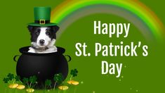 Happy Saint Patrick's Day wishes, blessings, messages for friends & family #saintpatricksday #stpatricksday