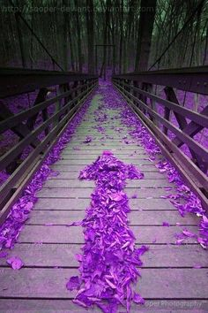 Purple leaf bridge