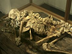 In Tokyo, a fossilized dragon man was discovered. It takes the shape of a regular man but somewhat smaller and with wings. Many people believe it is real proof of a Gargoyle or a fallen angel.