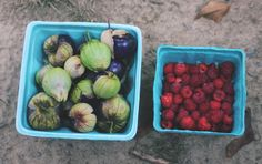Purple tomatillos and raspberries- fresh and organic from the farm.