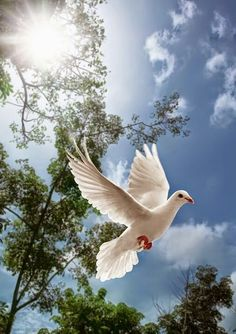 Holy Spirit is the power which always guide and guard us with positive response in loving, forgiveness and hel