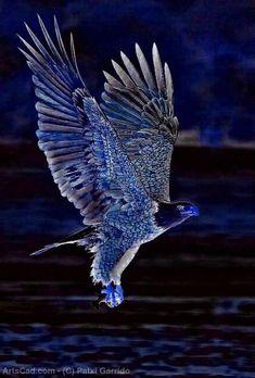 Obra De Arte >> Patxi Garrido >> the eagle blue
