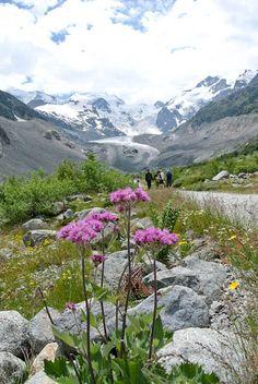 engadin_ferien (30) Swiss Chalet, Plitvice Lakes National Park, Seen, Switzerland, Wild Flowers, National Parks, Mountains, Places, Nature