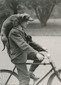 dog and man on bike
