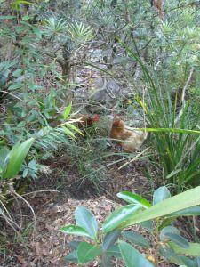 http://ordinary-2-extraordinary.com/tag/making-eucalyptus-leaf-mulch/