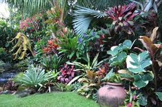 Tips for the maintenance of the tropical garden, . - Tips for the maintenance of the tropical garden, – Con … – - Small Tropical Gardens, Tropical Garden Design, Tropical Pool, Tropical Plants, Small Gardens, Outdoor Gardens, Small Garden Spaces, Exotic Plants, Bali Garden