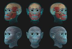 Taung Project.  - http://arc-team-open-research.blogspot.it/2012/11/taung-project-3d-forensic-facial.html