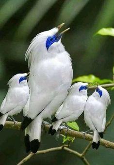 Kinds Of Birds, All Birds, Cute Birds, Pretty Birds, Little Birds, Nature Animals, Animals And Pets, Cute Animals, Exotic Birds