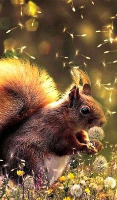 Diamond Painting The Squirrel Dandelion Paint with Diamonds Art Crystal Craft Decor Animals And Pets, Baby Animals, Funny Animals, Cute Animals, Beautiful Creatures, Animals Beautiful, Cute Squirrel, Squirrels, Hamsters