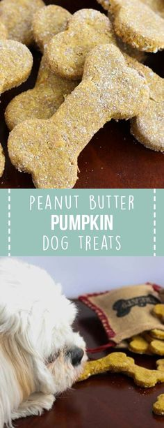 Peanut Butter Pumpkin Dog Treats are homemade treats made with only five natural ingredients! ##dogtreats #homemade #recipes #dogfood