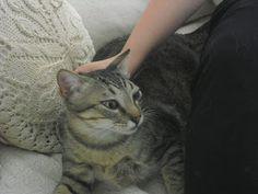 Como dar una pastilla a un gato