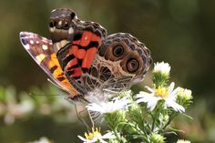 Butterfly along the Roanoke Canal Trail    www.wunderground.com