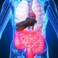 how to get more good bacteria in gut