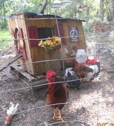 Designer chicken coop and decor!