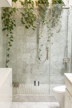 Are you planning to remodel your shower? There are lots of decisions to be made throughout the process of a bath remodel – from the fixtures to the showerhead to the tile… it can be a lot to decide on! But the value of rebuilding a shower is undeniable. Shower Plant, Glass Shower, Bathtub Shower, Plants In The Shower, Shower Song, Shower Tiles, Bathroom Trends, Bathroom Renovations, Bathroom Models