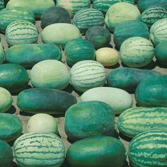 You don't have to choose between sustainably-grown and organic. You can have both. We know absolutely nothing about watermelons, but we can help you with your audience. #organic #sustainablygrown #growthmindset #businessstrategy #rockmission #growthhacking #marketingtips #businessgrowth #marketingplan #growthmarketing #consulting #casestudy Growth Hacking, Marketing Plan, Growth Mindset, Organic, Rock, Amazing, Skirt, Locks, The Rock
