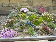 garden rockery ideas rockery plants in a rock box gardeners tips 500x375