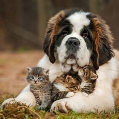 THEY SURE ARE IN SAFE PAWS ..SO BEAUTIFUL.