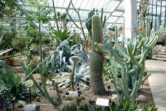 Image result for cactus kew gardens