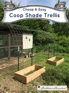 Shade Trellis for the Chicken Coop (Gentleman Homestead)