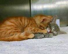 """My friend who works at a shelter found these two like this..."""