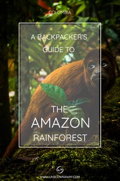 Check out our guide to visiting the Amazon jungle in Colombia, beyond Leticia - with or without a guide! Visit the local Amazon river communities for an authentic Amazon experience. Amazon River, Colombia Travel, Amazon Rainforest, Amazon Art, The Locals, Backpacking, Tours, Amazons, Explore