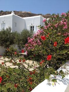 The gardens at Seaside Cottage by Belvedere at Psarou Beach, Mykonos