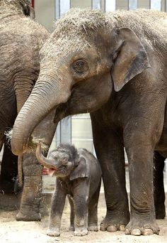 Elephants On Pinterest Baby Elephants Elephant Love And
