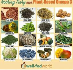 Plant based / vegan omega 3s