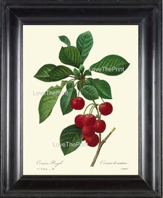 BOTANICAL PRINT Redoute Flower  Botanical Art Print 35 Beautiful Red Cherries Branch Plant Garden Nature to Frame Home Decor