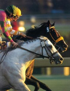 Alphabet Soup 1991 Throughbred (Cozzene x Illiterate, Arts and Letters) Record: 24-10-3-6, Earnings: $2,990,270. Won: 1996 Breeders Cup Classic-G1, 1995 Del Mar Budweiser Breeders Cup Handicap-G2, Native Diver Handicap-G3, 1996 San Antonio Handicap-G2, San Pasqual Handicap.-G2, Pat O`Brien Handicap-G3, Harry F. Bud Brubaker Handicap.