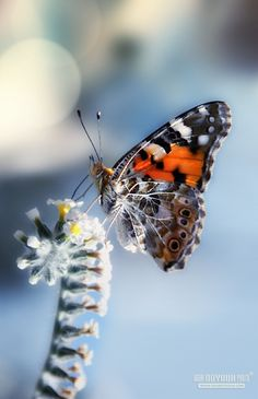 ! Butterfly Kisses, Butterfly Flowers, Beautiful Butterflies, Bokeh Photography, Floating Flowers, Mother Nature, Ladybug, Cool Photos, Wings