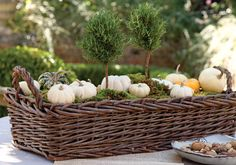 Rosemary topiaries and gourds for your table.