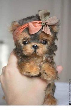 Cute Baby Dogs, Cute Little Puppies, Cute Dogs And Puppies, Cute Little Animals, Cute Funny Animals, Cutest Dogs, Adorable Baby Animals, Cute Small Dogs, Little Dogs