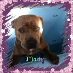 Marty. kennels victoria