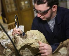 Scientists painstakingly work on the remains of the massive dinosaur