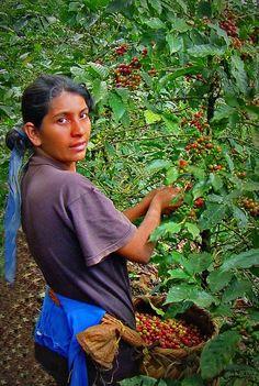 Es café planta.Está en Costa Rica.Usted puede ver muy cafés en Costa Rica. Es muy rico y es pequeña.