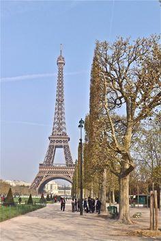 Pleached trees, Champ de Mars, Paris